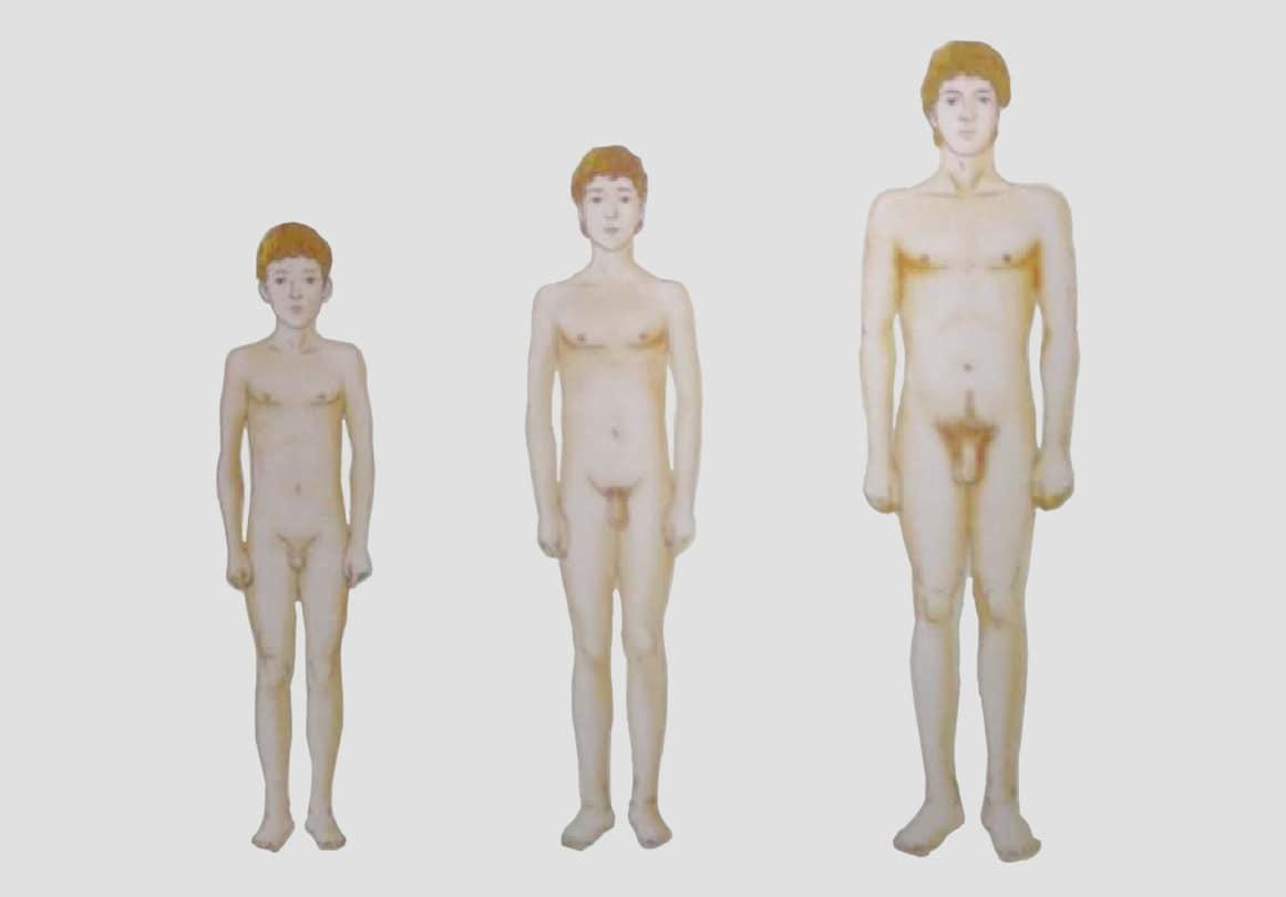 Половой член может расти до 23 лет.