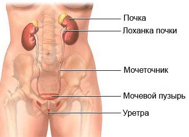 Многие женщины страдают из-за жжения в мочеиспускательном канале