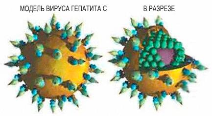 Можно ли жить с гепатитом с