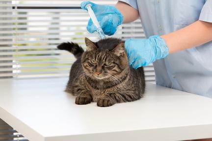 Хламидиоз у кошек: причины, симптомы, лечение
